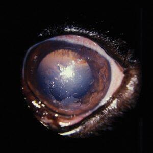 Figure 6-Superficial Ulcer