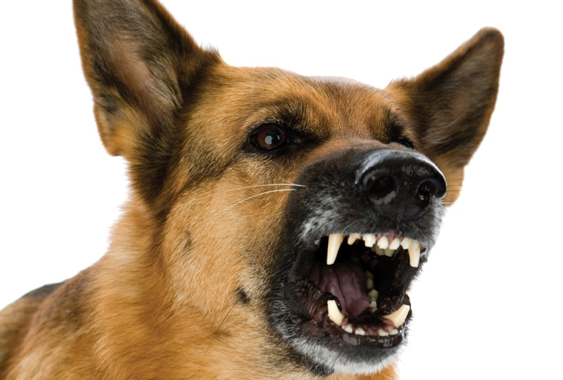 Dog Bites: Protecting Your Staff and Clients