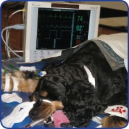Figure 1. Use of multipurpose monitor for dog undergoing anesthesia