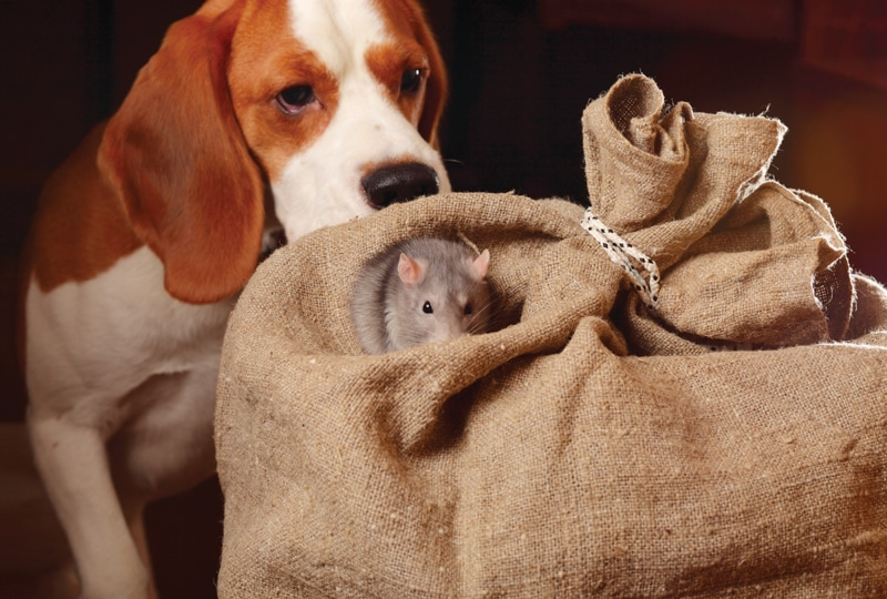 Rodenticide Poisoning: What to Do After Exposure | Today's