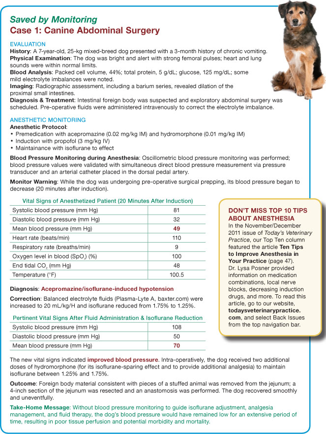 Anesthetic Monitoring Your Questions Answered Todays Veterinary