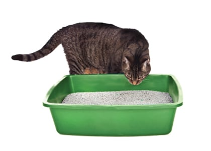 Diagnosis and Management of Feline Urine Marking | Today's