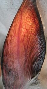 NEW Figure 1A