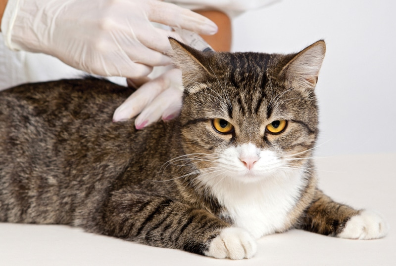 2013 Feline Vaccination Guidelines