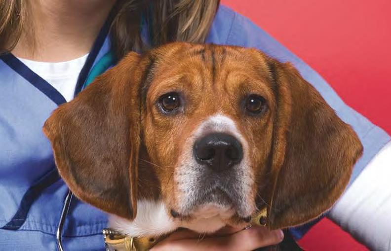 Koiran Epilepsia Lopetus