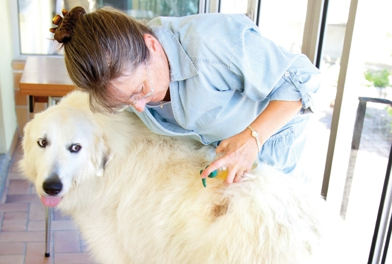 How to Avoid the Five Most Common Mistakes in Veterinary Dermatology