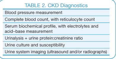 Canine Chronic Kidney Disease Current Diagnostics Amp Goals