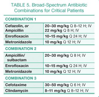 Ampicillin uses