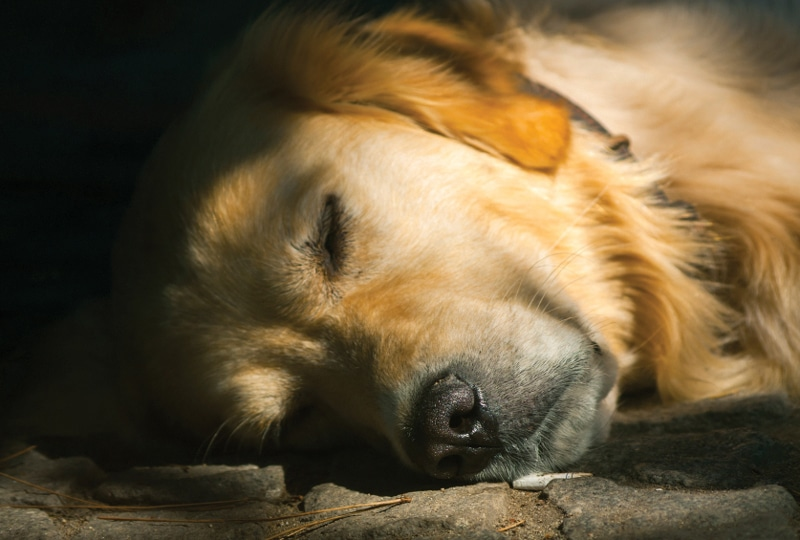 Managing Chronic Pain In Cats & Dogs, Part 1: The Two Most Important Tools in the Treatment of Osteoarthritis