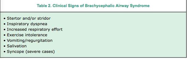 Surgical Skills | Corrective Surgery: Brachycephalic Airway