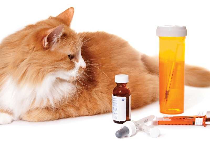 Acute Pain In Cats: Treatment With NSAIDs