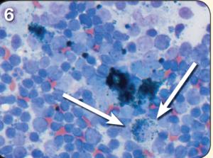 lymph node fig 6 a