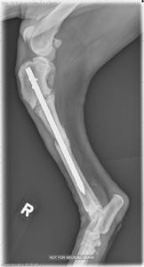 Figure 4D