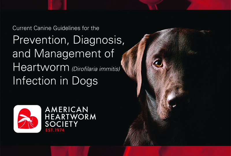 AHS Heartworm Hotline: Heartworm Diagnostics: What Do the Latest American Heartworm Society Canine Guidelines Tell Us?
