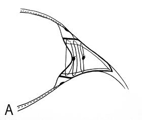 F01_Fig07A
