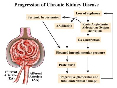 Feline Chronic Kidney Disease Today S Veterinary Practice
