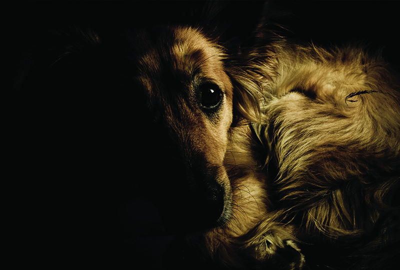 Managing Chronic Pain in Dogs and Cats, Part 3: Management of Nonosteoarthritic Pain Conditions