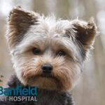 2015_0506_Banfield_Breeds_article header