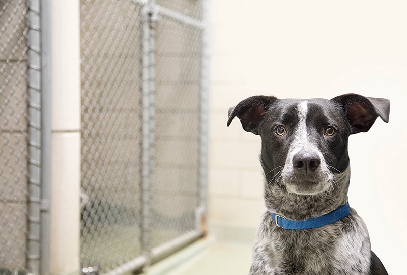 Managing Heartworm Disease in Shelter Animals