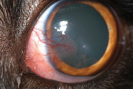 2015_0506_Ophthalmology Cornea_Fig10