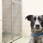 2015_0506_HH_Shelter-Heartworm_article-header