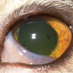 2015_0506_Ophthalmology-Cornea_article-header