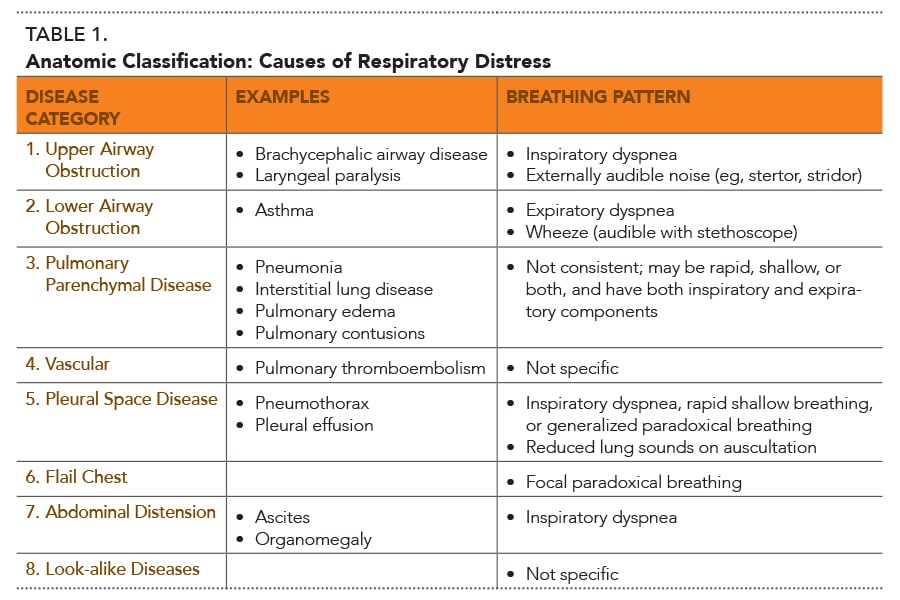 Approach To Respiratory Distress In Dogs Cats Today S Veterinary