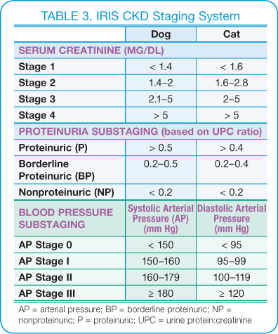 Canine Chronic Kidney Disease | Diagnostics & Goals for Long