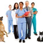 iStock_10398977_Team-Pets