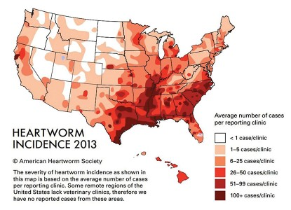 FIGURE 1. Heartworm incidence survey map (2013). Courtesy American Heartworm Society