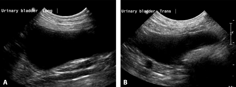 Figure 14. Long-axis view of the urinary bladder in a dog (A). Short-axis image of the urinary bladder cranial to the trigone (B).
