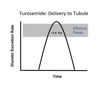 FIGURE 4. Diuresis occurs when urine levels of furosemide are within the therapeutic range. Urinary furosemide levels, of course, depend on the plasma concentration delivered to, and filtered by, the glomerulus, which, in turn, is affected by furosemide bioavailability. In this hypothetical example, diuresis begins by 1 hour and persists for 3 to 5 hours. This represents the ideal dosage for once-daily treatment, as corresponding plasma levels (reflected in urinary concentration) are high enough to maximize time in the therapeutic range but not create a risk for ototoxicity.