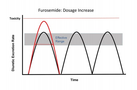 FIGURE 5. If resistance to furosemide results or other factors (eg, a high salt meal) dictate that more diuresis is needed, 1 of 2 strategies may be used: First is to administer a higher dosage, as shown with the red pharmacodynamic curve. The increase in dosage increases the urine level of the diuretic but provides only a small increase in time in the effective range, enhancing diuresis (red arrow) but increasing risk for toxicity. A better approach, although problematic in terms of owner compliance, is to administer multiple doses throughout the day. As shown in this figure, administering the same dosage 3 times triples the time in the effective range and avoids the risk for toxicity.