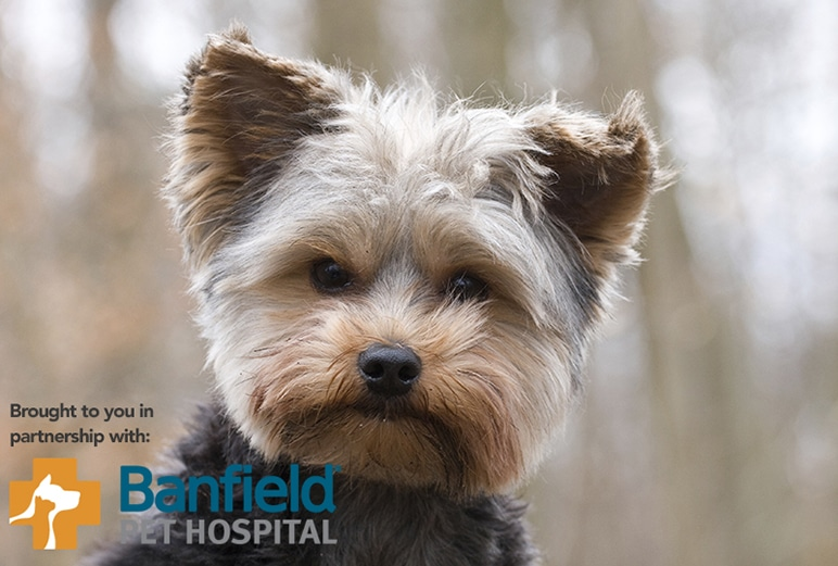 Pet Health by the Numbers</br><em>State of Pet Health 2015 Report</em>