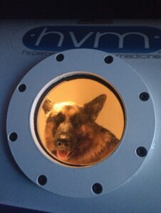 FIGURE 7. A young German shepherd is treated with a session of hyperbaric oxygen for oomycosis.