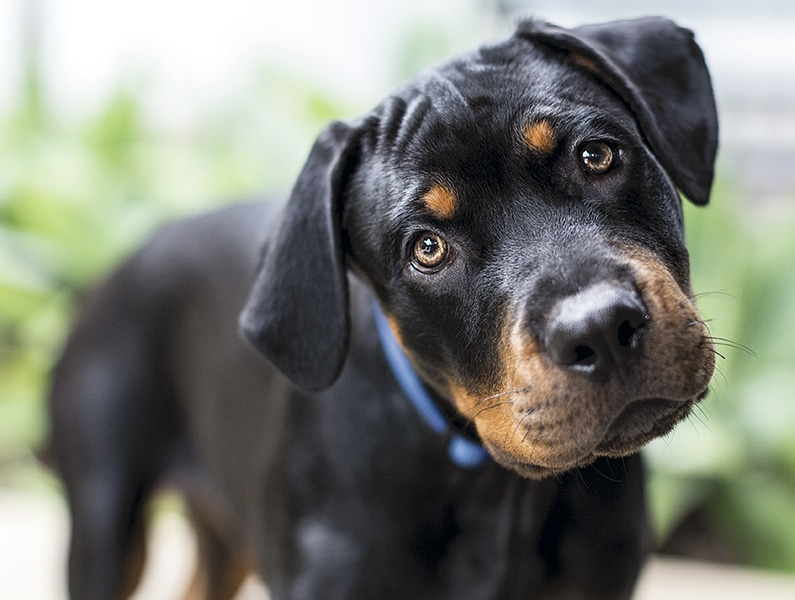 Head Tilt in Dogs: A Clinical Approach   Today's Veterinary