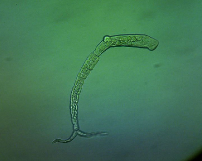 New Study by Veterinary Researcher Shows Promise in the Fight Against Parasitic Worms