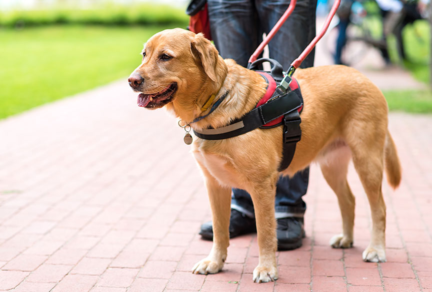 Service Dogs Help War Veterans with PTSD Symptoms
