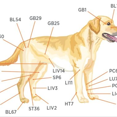 FIGURE 1. Location of common acupoints on a dog. Acupoints are where nerves and blood vessels converge.
