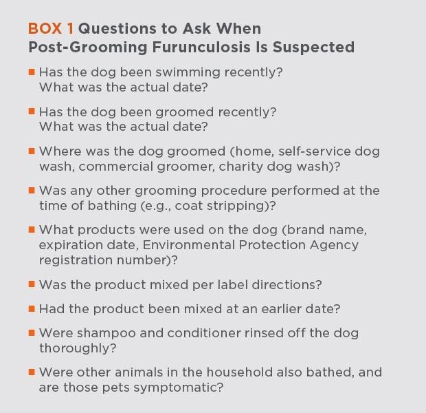 Post-Grooming Furunculosis | Today's Veterinary Practice
