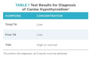 Canine Hypothyroidism: Diagnosis and Treatment | Today's Veterinary