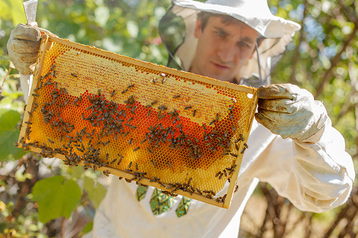 How Honey Bees Are Changing Veterinary Medicine (and Why Pollinators Matter)