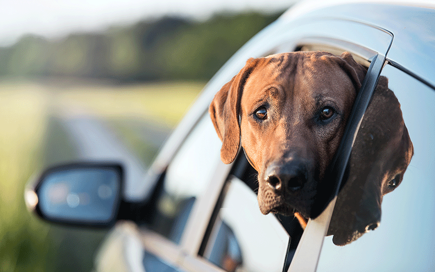 How to Educate Clients About Motion Sickness in Dogs