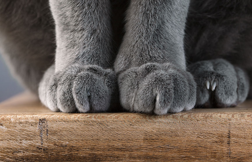 New York bans cat declawing