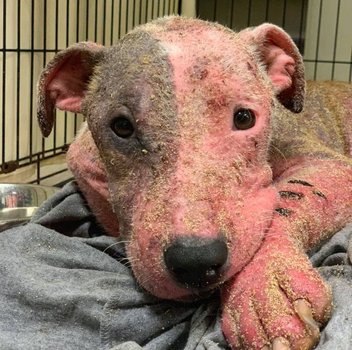 Badly Injured Dog Rescued After Being Buried Alive in Hawaii