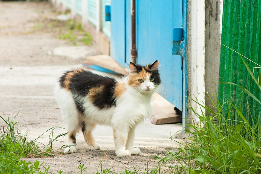trap-neuter-release for feral cats