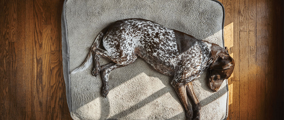 Grapiprant for Control of Osteoarthritis Pain in Dogs