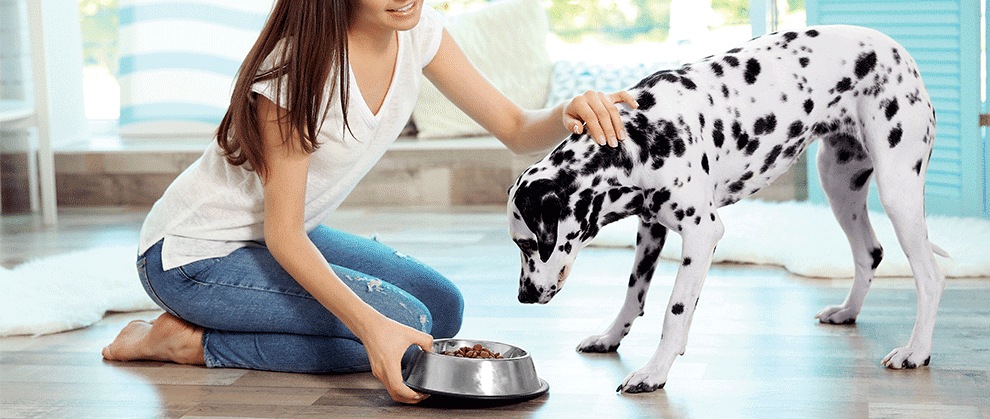 Nutrition and Canine Osteoarthritis: What Do We Know?