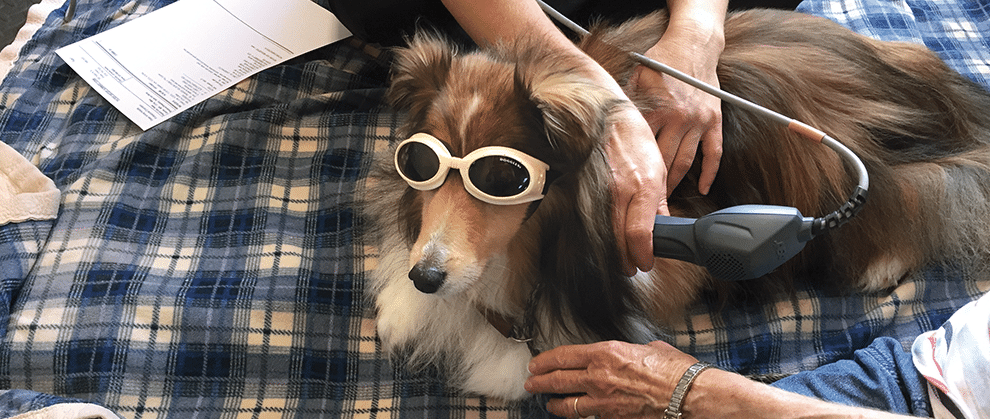 Laser Therapy for Treatment of Joint Disease in Dogs and Cats