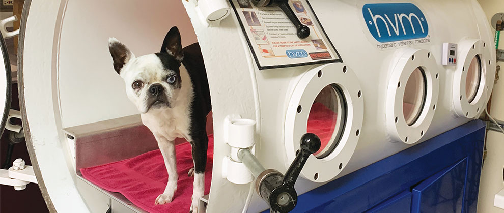 Diving In: Hyperbaric Oxygen Therapy in Veterinary Medicine